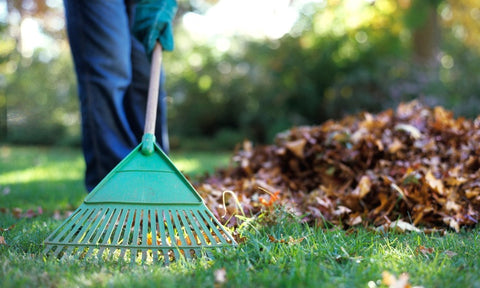Raking your lawn of leaves and sticks will promote growth and a fuller lawn.