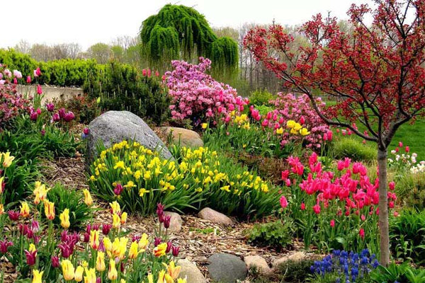 Flower garden to attract butterflies and birds.
