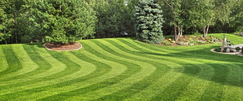 Beautiful Lawn Care - Not Just For Pets