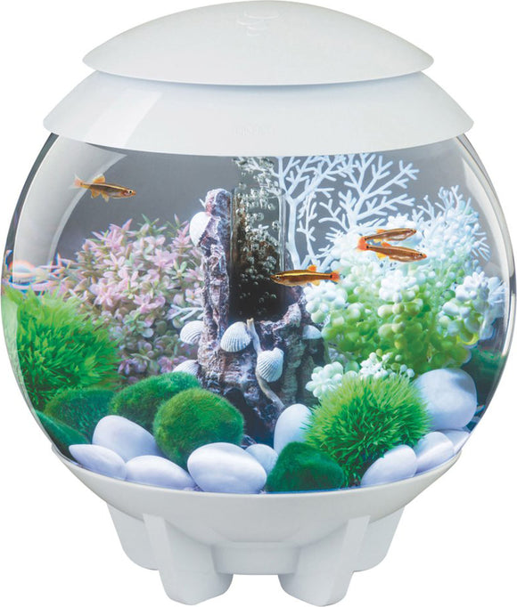 Oase - Aquatics - Biorb Halo 15 Mcr Aquarium
