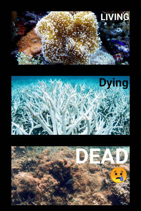 Save the Coral