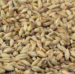 Briess Brewers 2 Row Brewers Malt