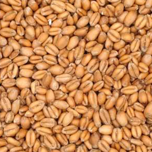 Briess Soft Red Torrified Wheat Kernel