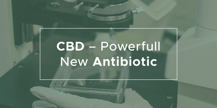 CBD – Powerfull New Antibiotic