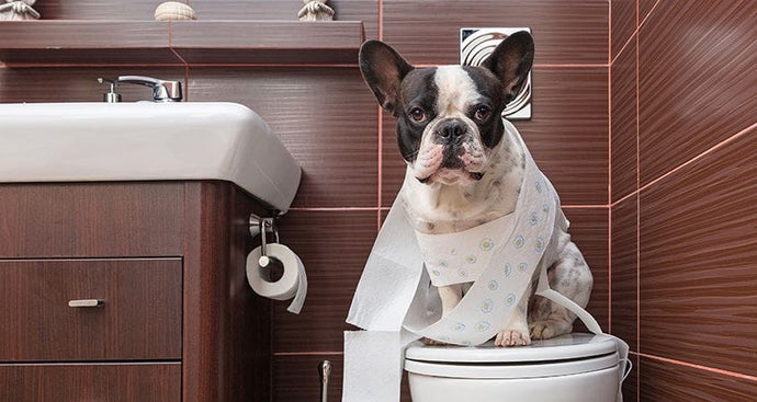 5 Weird Things Pets Do