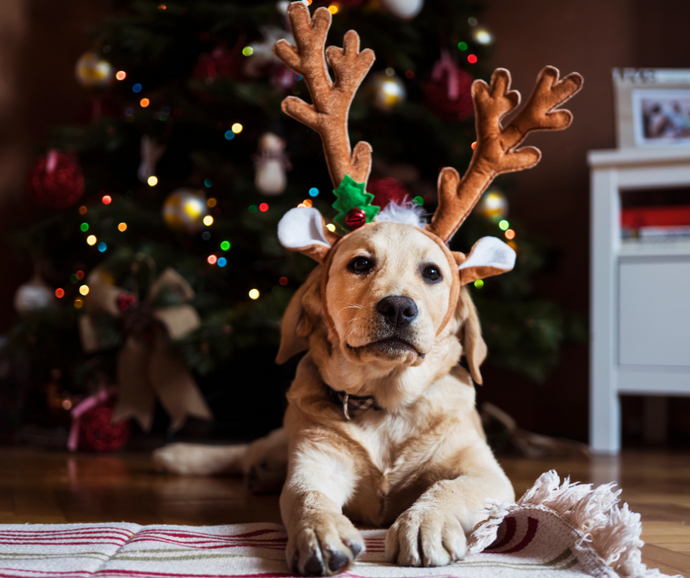 Celebrating the season: Pet Safety Guide