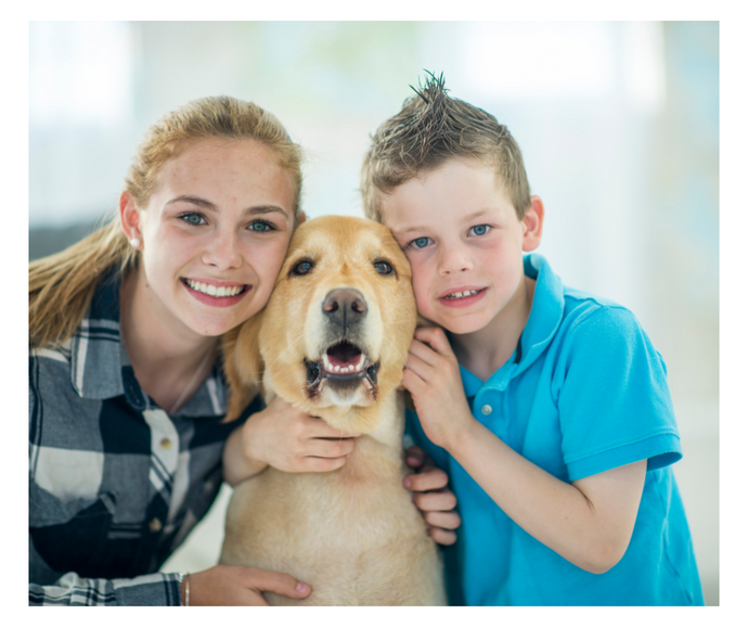 Caring for Disabled Pets