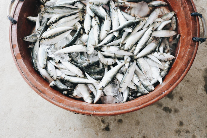 The Benefits of Anchovies and Sardines