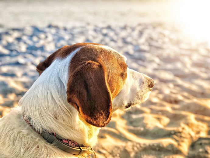 How To Keep Your Pets Safe & Cool with Approaching Warm Weather