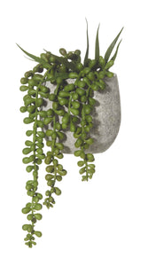 Hanging Pearls in pot