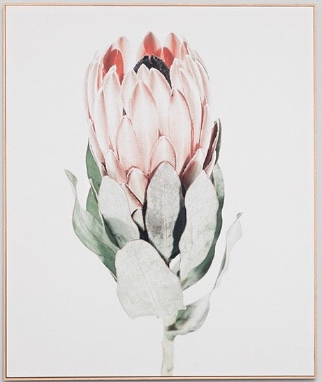 Protea canvas 2