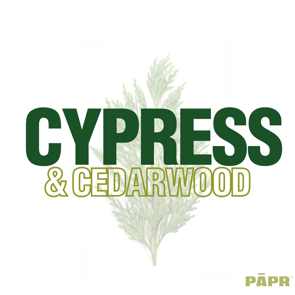 CEDARWOOD AND CYPRESS ESSENTIAL OIL; A PERFECT SCENT FOR THE HOLIDAYS