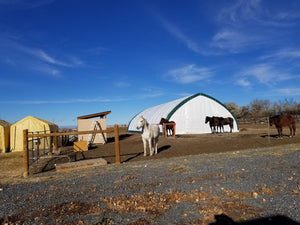 Black Friday Half Day Horse Camp $35.00