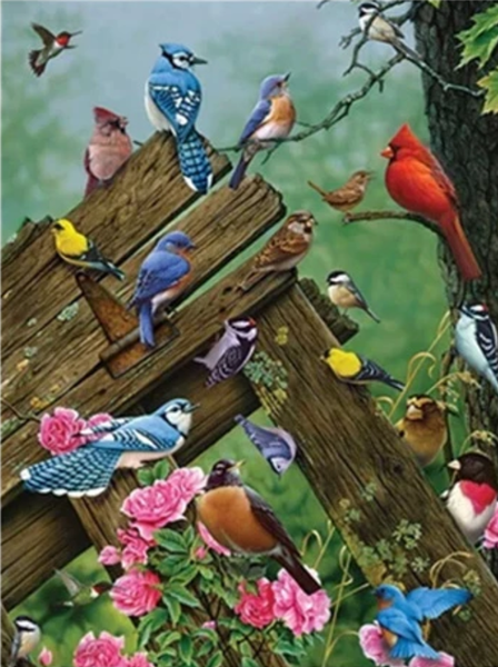 Bird Diy Paint By Numbers Kits UK  PBN95659