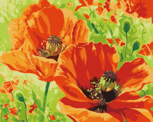 Poppy Flower Diy Paint By Numbers Kits UK ZXB638