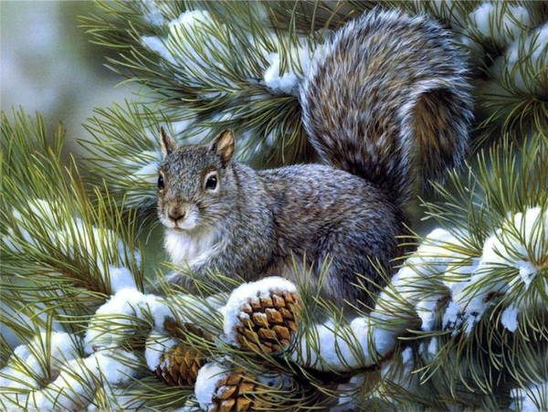 Squirrel Diy Paint by Numbers Kits UK DIY PBN30097