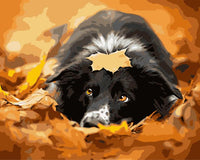 Maple Leaf Dog Diy Paint By Numbers Kits Uk SY-4050-052