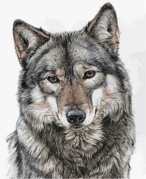 Animal Wolf Diy Paint By Numbers Kits Uk ZXQ2715
