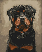 Pet Black Dog Diy Paint By Numbers Kits Uk WM-330
