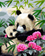Lovely Panda Diy Paint By Numbers Kits Uk WM-731