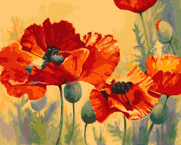 Poppy Flower Diy Paint By Numbers Kits UK WM-772