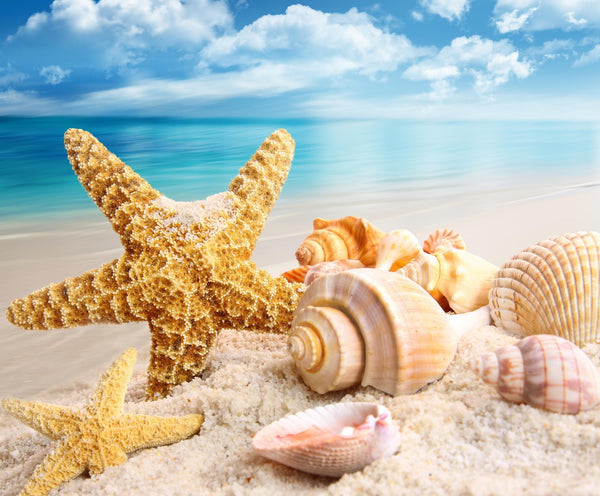 Starfish Diy Paint By Numbers Kits UK VM30248