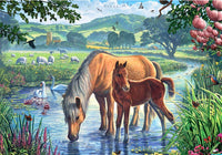 Animals Horse Paint By Numbers Kits Uk VM90657