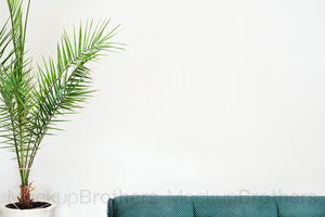 Interior stock photo with palm tree and sofa