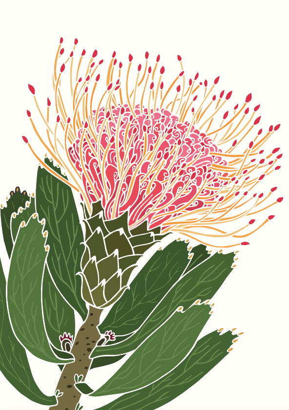 White Pin Cushion Protea Art Print