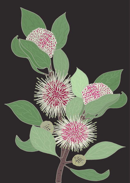 Charcoal Sea Urchin Hakea Art Print