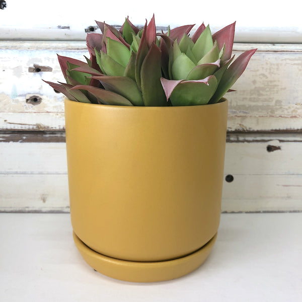 Oslo Planter  Small - Tobacco
