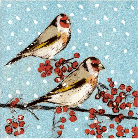 Snowy Finches