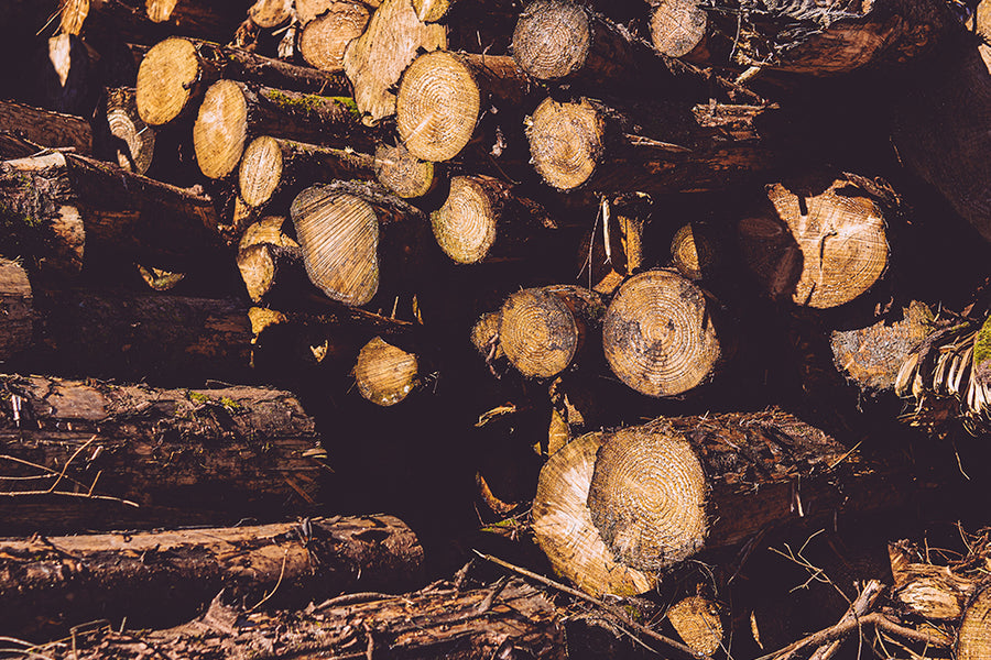 Firewood Wholesale from Surefire Wood