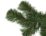 Mountain Pine Foliage Close-up