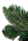 Oregon Pine Foliage Close-up