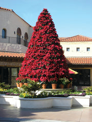 "17'6"" Poinsettia Tree with Silk Poinsettia Plants"