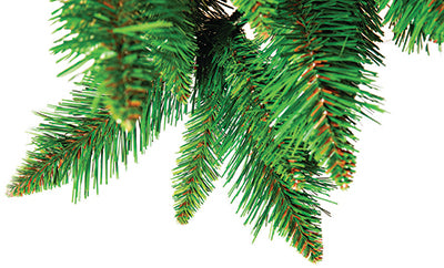 Sequoia Tree Foliage Close-up