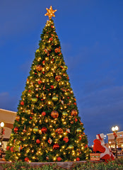 Giant Christmas Tree at Shopping Center