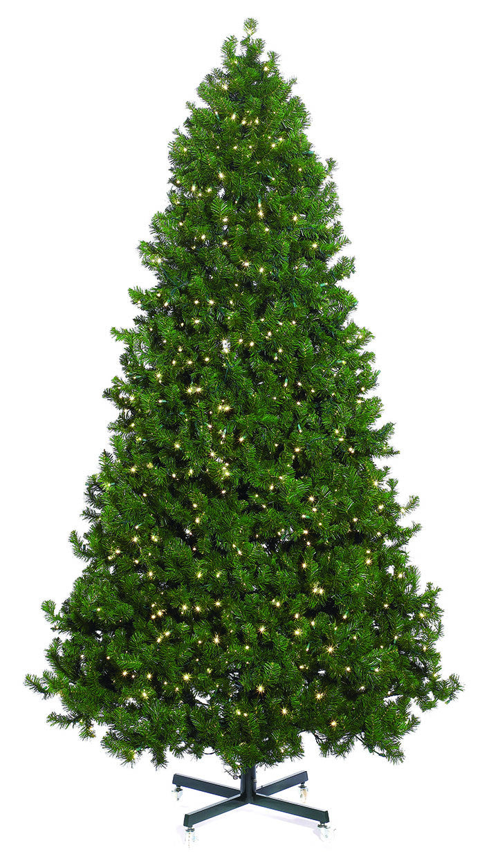 Commercial Mountain Pine Christmas Tree