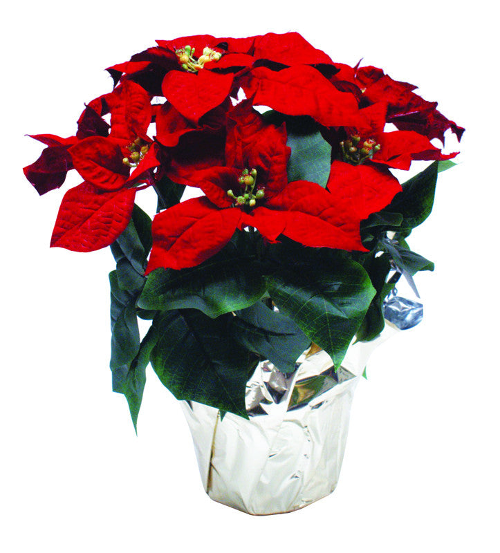 Silk Poinsettia Plant
