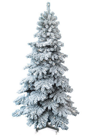 Spruce Snow Capped Tree