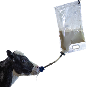 Colostrum Storage and Feeding Bags