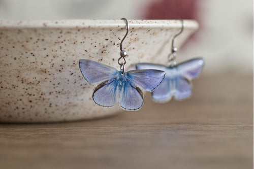 Acdria Common Blue Butterfly Earrings