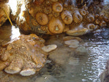 Close-up of tidepool