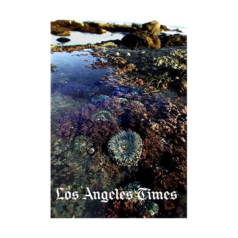 Dana Point Tidepools Photograph