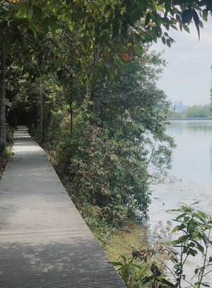Pass It On Conscious Tour: MacRitchie Forest