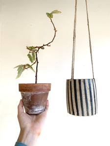 31 striped planter