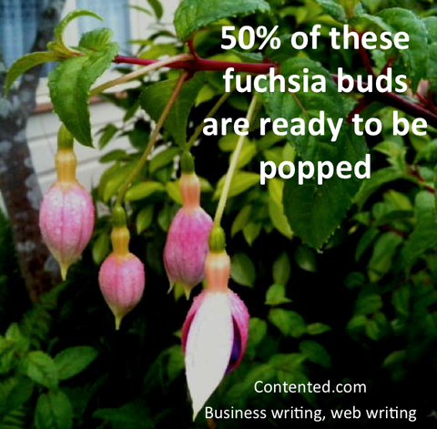 50% of these fuchsia buds are ready to be popped
