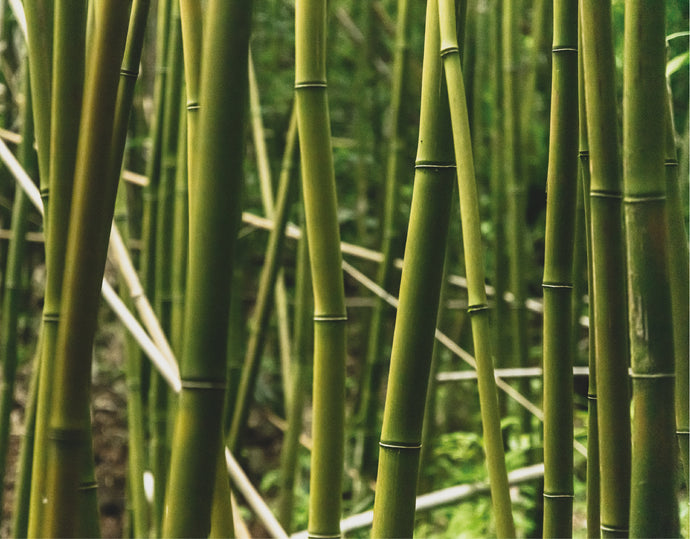 Bamboo - The Wonder Material