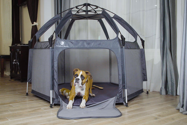 Why Your Pets Benefit From The Pop N Go Playpen